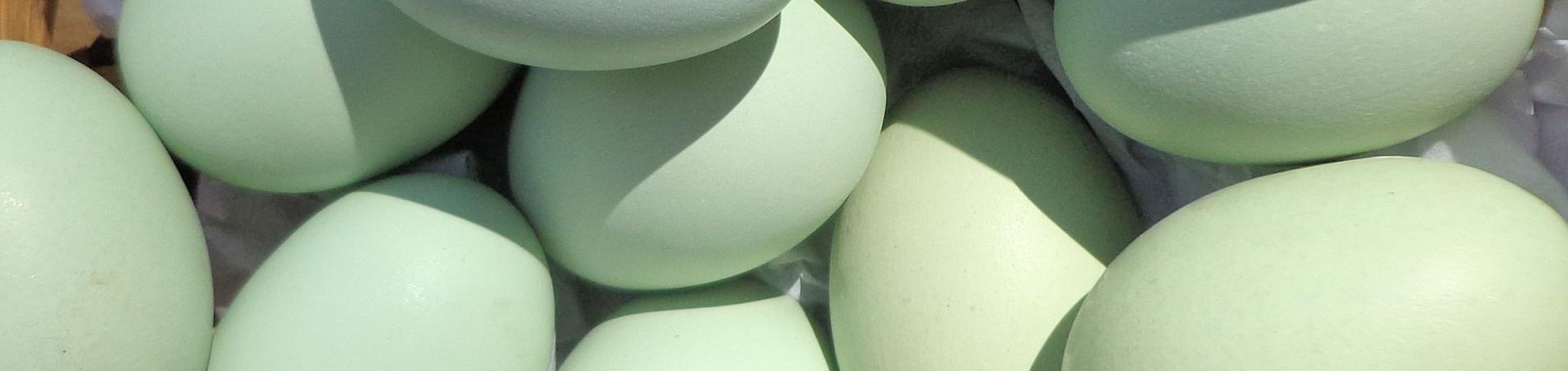 Proyecto FIA Huevos Azules